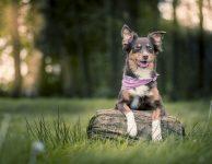 Útulek pro psy – aneb způsob, jak si hrát s pejsky