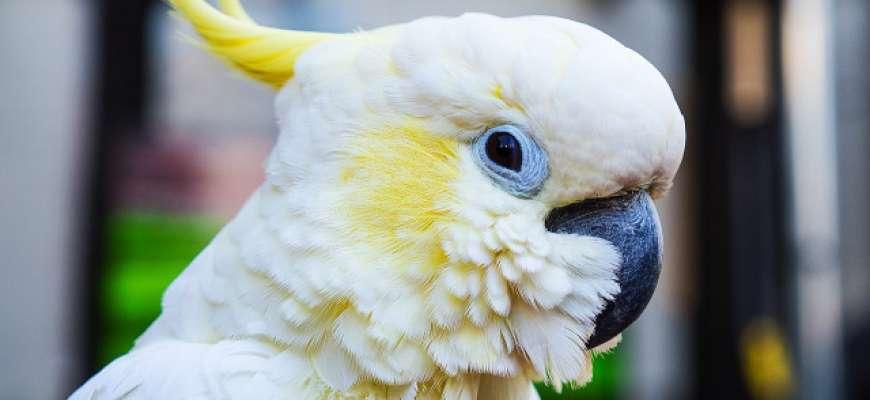 Nové živočišné druhy vznikají i díky lidem