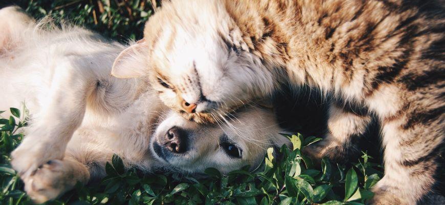 Pořízení psa - na co si dávat pozor