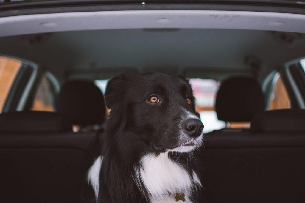 Sháníte aktivního psího kamaráda?