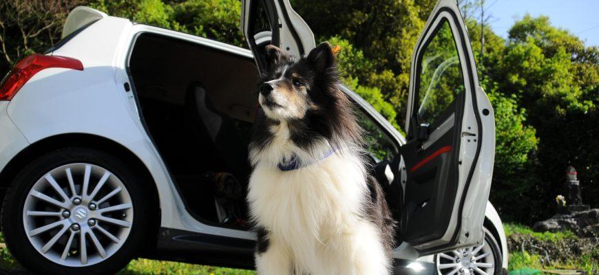Dog Car The Magnificent  - n-k / Pixabay